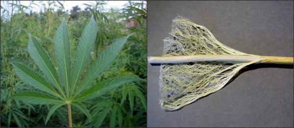 fibra-grafeno-marihuana