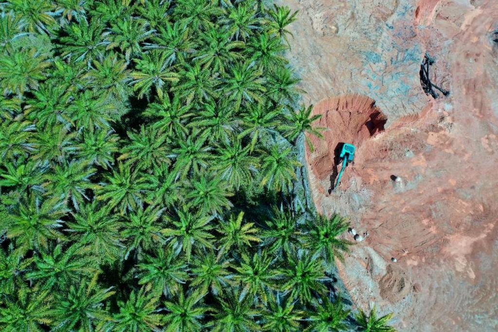 biocumbustibles y sus terribles efectos en el medio